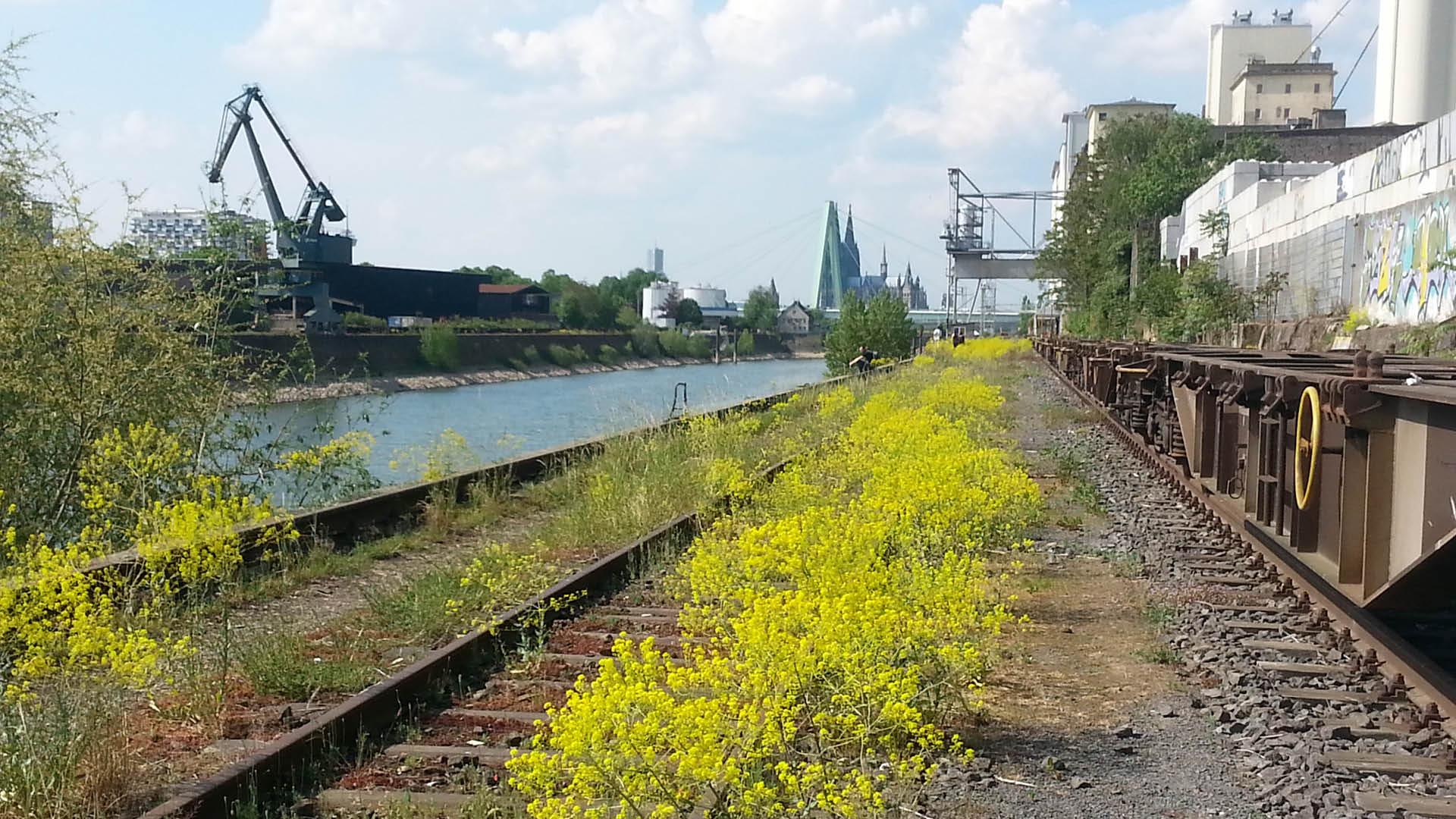 Das Bearbeitungsgebiet - der Deutzer Hafen in Köln.